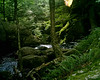 """Above Royalston Falls; """"Jungle Falls"""".  Something happened with the light.  I don't know whether it was external or within the borrowed camera but it created this eerie, jungly image that contrasted pretty sharply with the neighboring one in this gallery."""